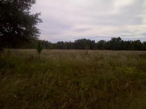 Brooker Creek Preserve