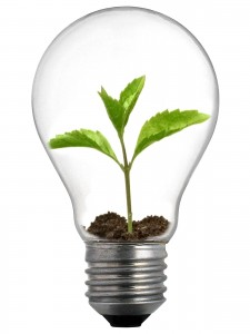 Sprout_Lightbulb