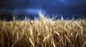 Gluten is found in wheat, rye and barley.