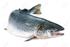 Atlantic salmon are both farmed and wild-caught.