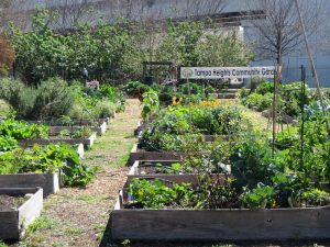 Gardening beds at the Tampa Heights Community Garden